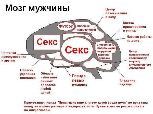 Почему член встает - bio-faq.ru