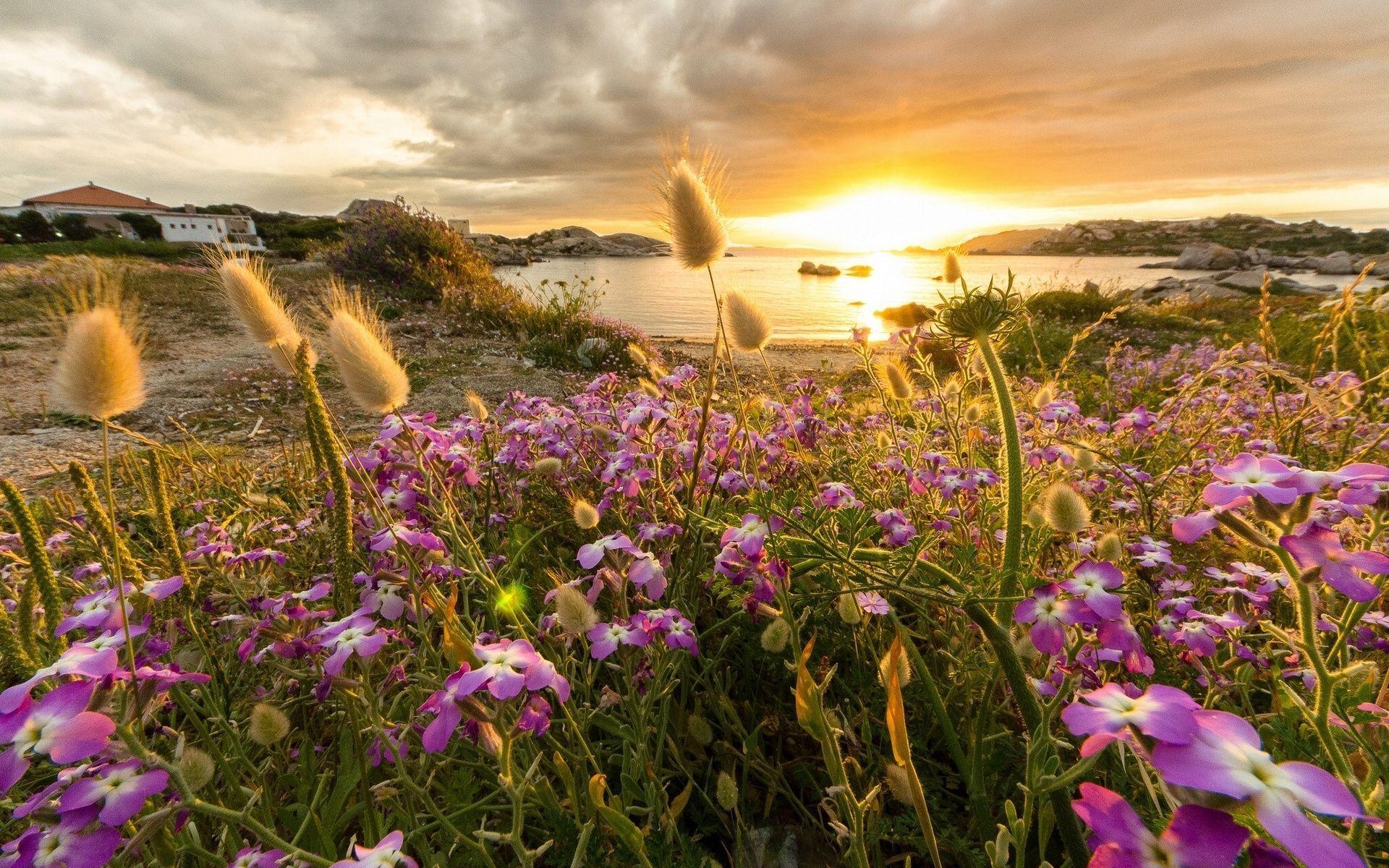 природа цветы трава мельниц восход солнце  № 2556655  скачать