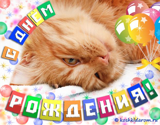 Кот с днем рождения открытка