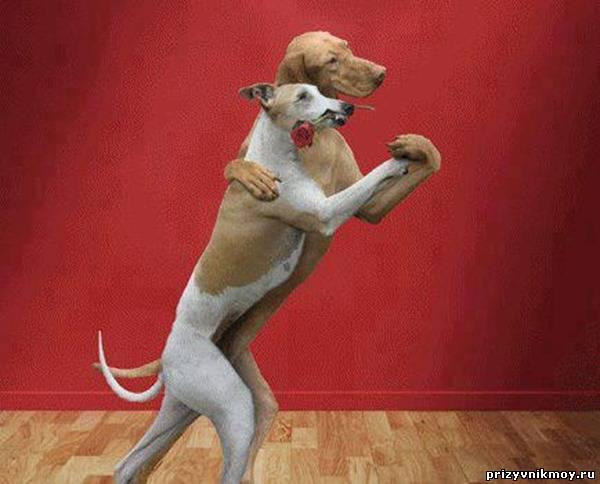 Танец собачки песня скачать