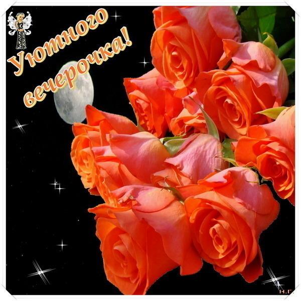 Фото цветка добрый вечер