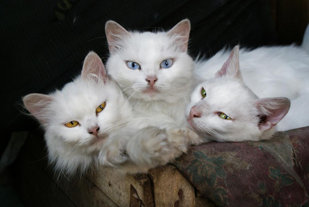Картинки про котов котят и кошек с надписями, верочка