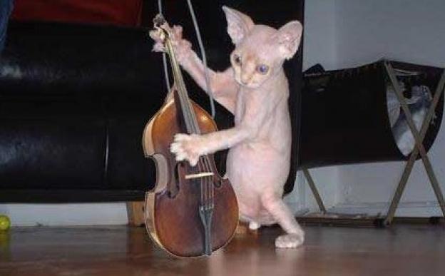 онлайн шутка слушать скрипку они