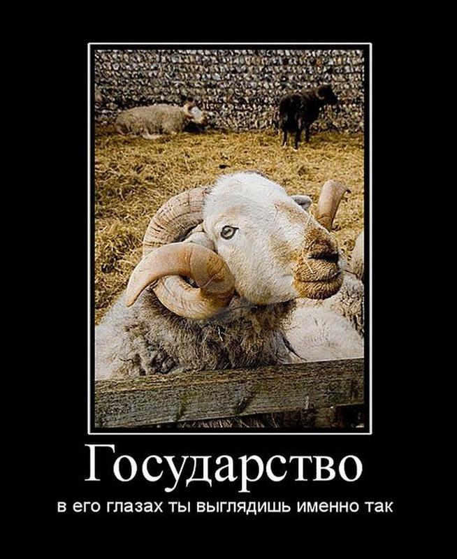 А ты не путай стадо со стаей