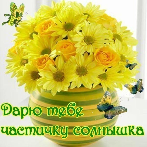 Сад участника Анна Н fialka  Энциклопедия роз