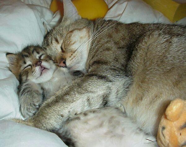 Если женщине снится кошка, рожающая котят, очень велика вероятность беременности.