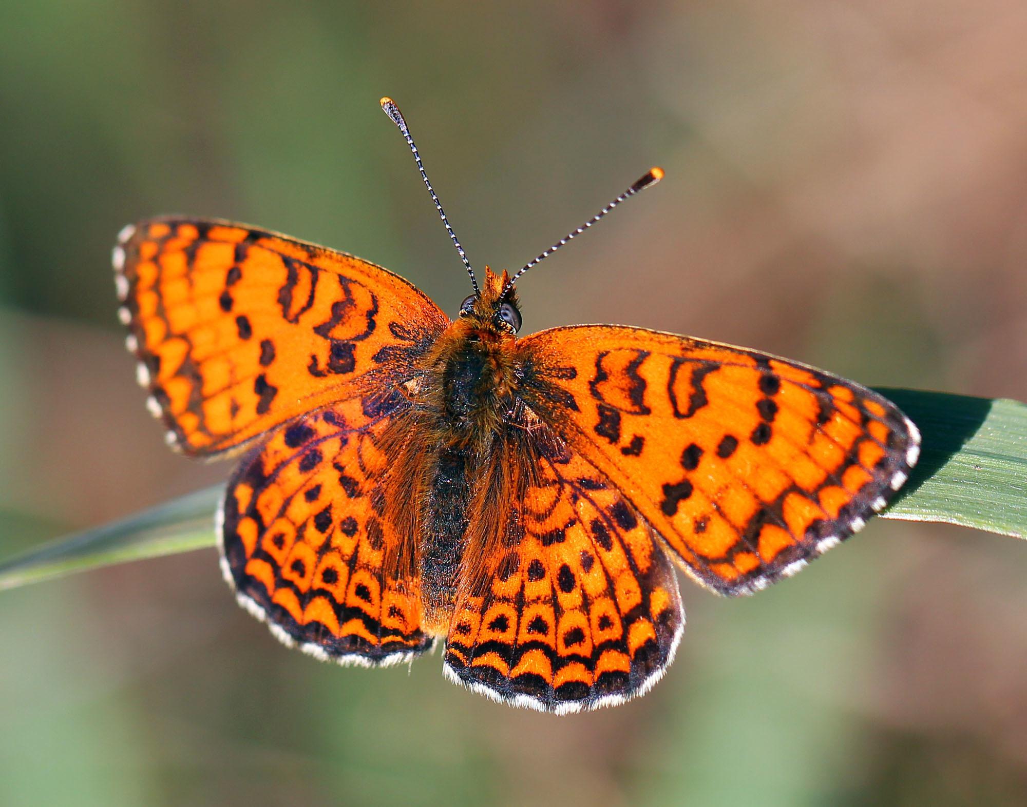 Картинки бабочки и их названия
