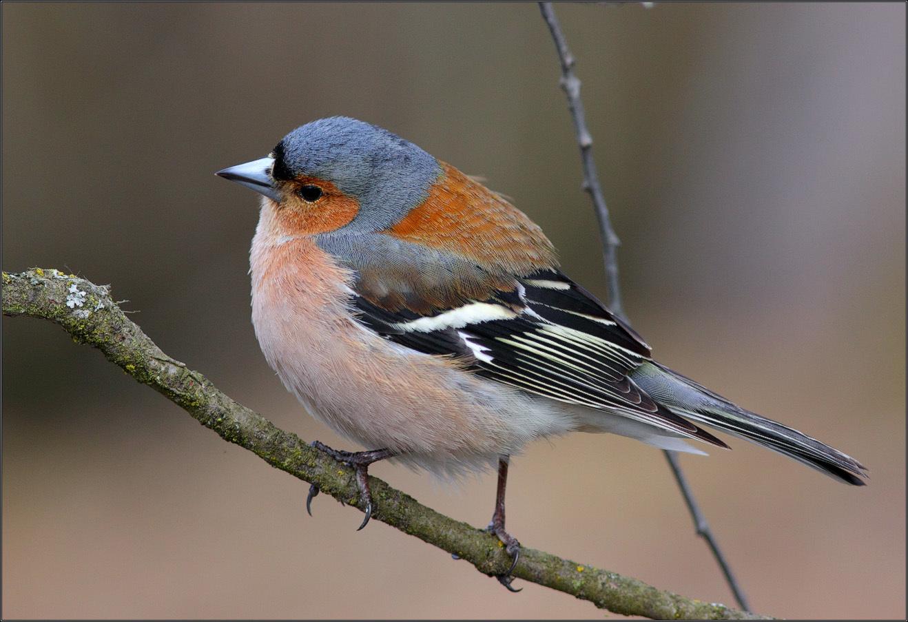 эльбрус неактивный фото птиц подмосковья весной с названиями подарок только