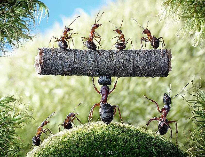 Прикольные картинки муравьи, картинки спанч