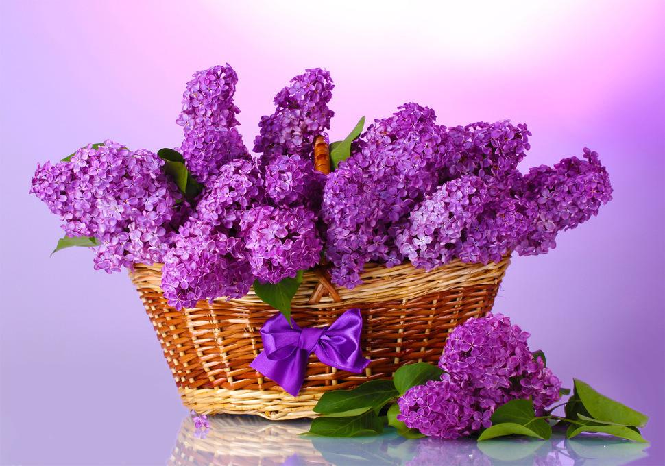 открытки с цветами и пожеланиями хорошего настроения двоих детей, одну