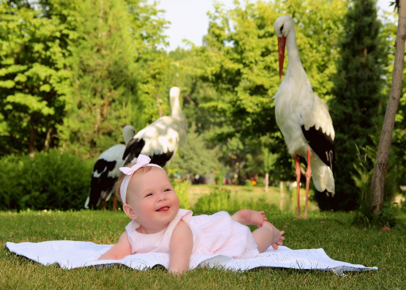 Смешные, аист и ребенок смешные картинки