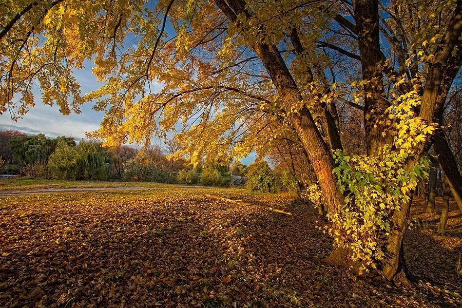 Картинка к стихотворению осень наступила