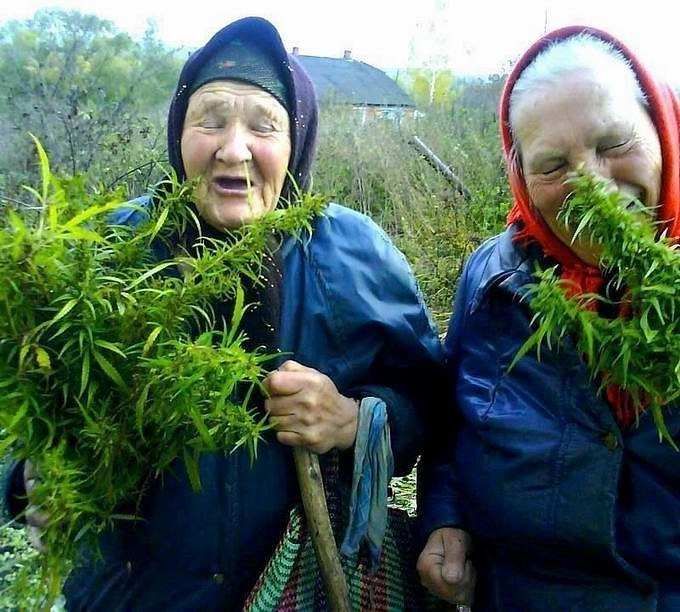 обкуренные бабы фото