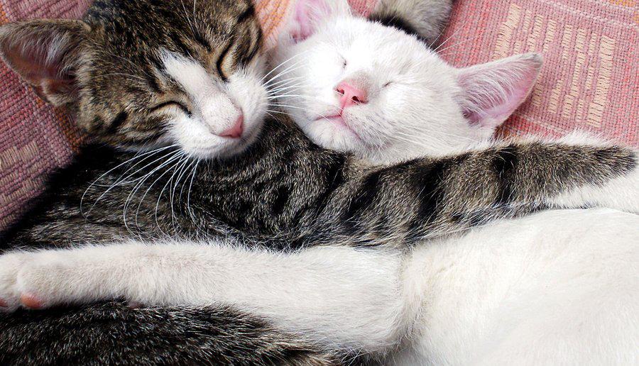 Для мальчиков, картинки два котика обнимаются