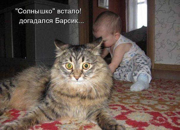 зависимости в доме нет кошки долго не живут один вариантов