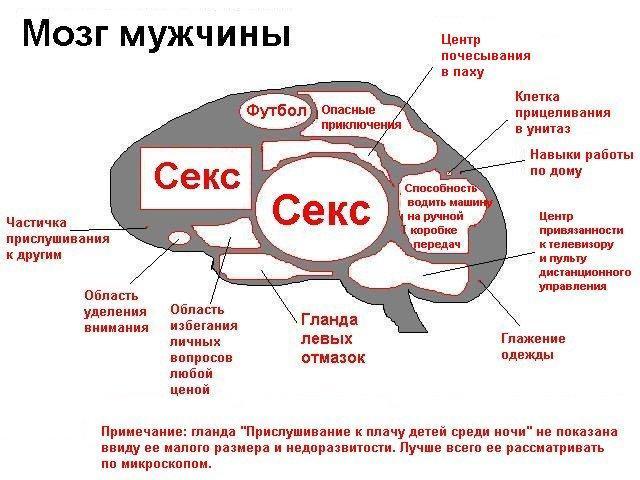kakaya-chast-mozga-otvechaet-za-seksualnuyu-potrebnost