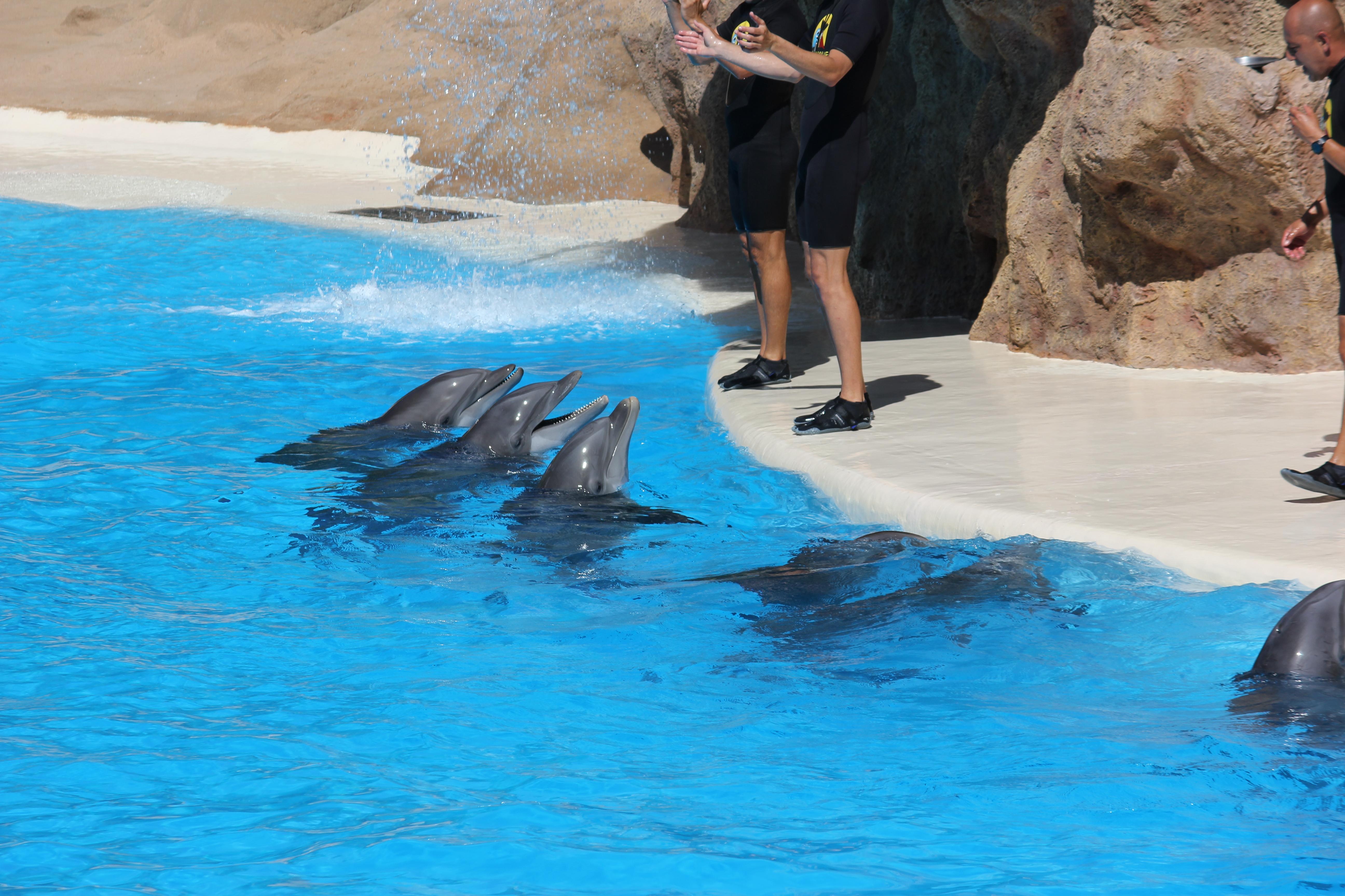 Фото вагина дельфина, Половые органы дельфинов: описание 17 фотография