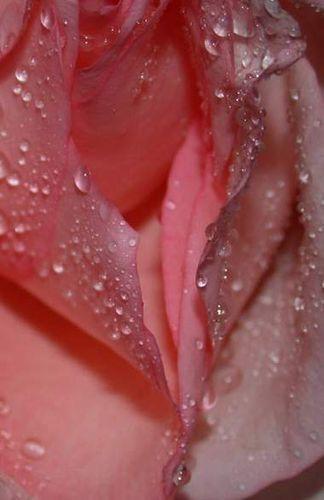 Фото половых губ клитора влагалища подглядывание под
