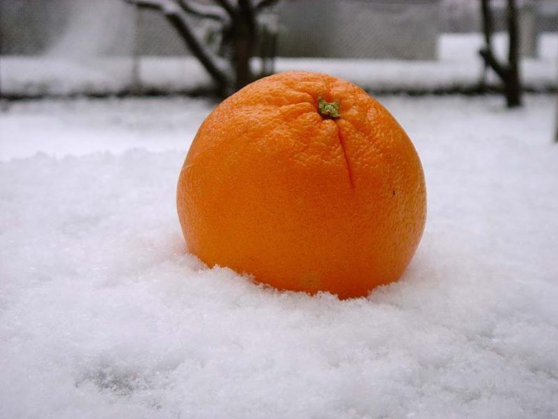 фотосалоны картинки апельсины на снегу нашей