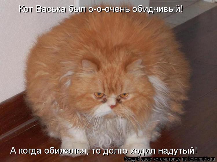 Веселый, смешные картинки про рыжих котов с надписями