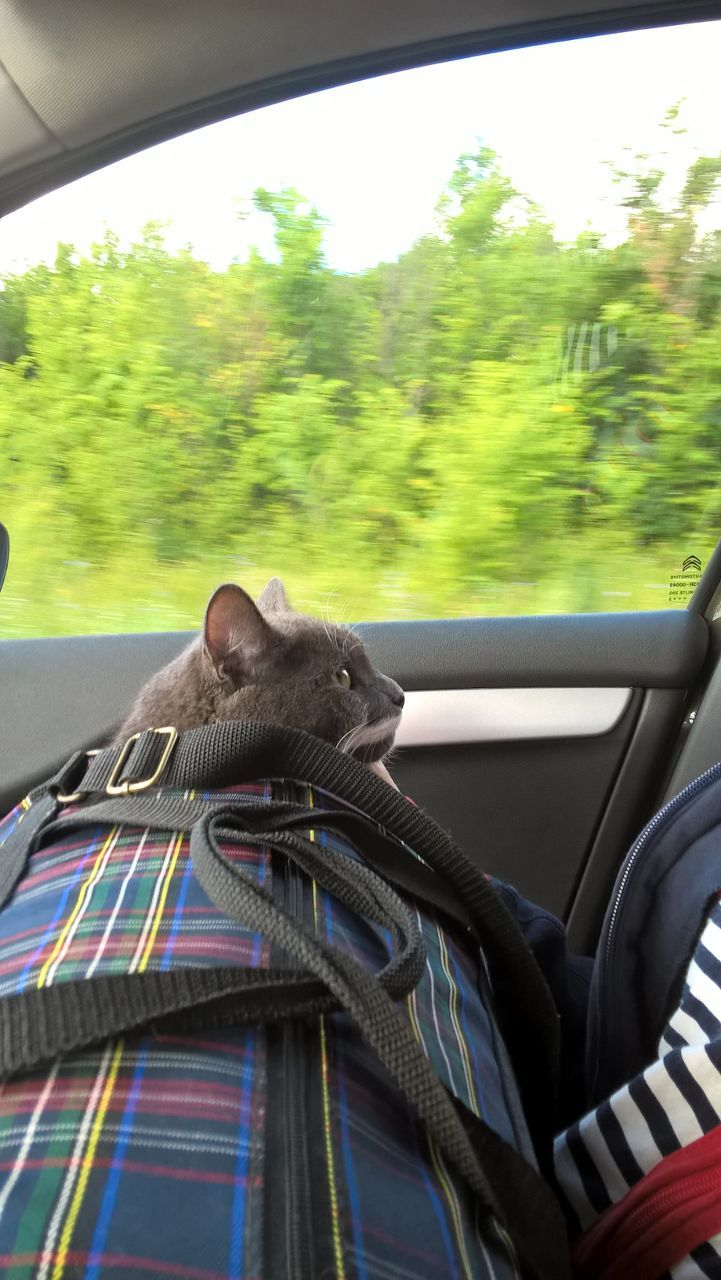 Как коты переносят дорогу