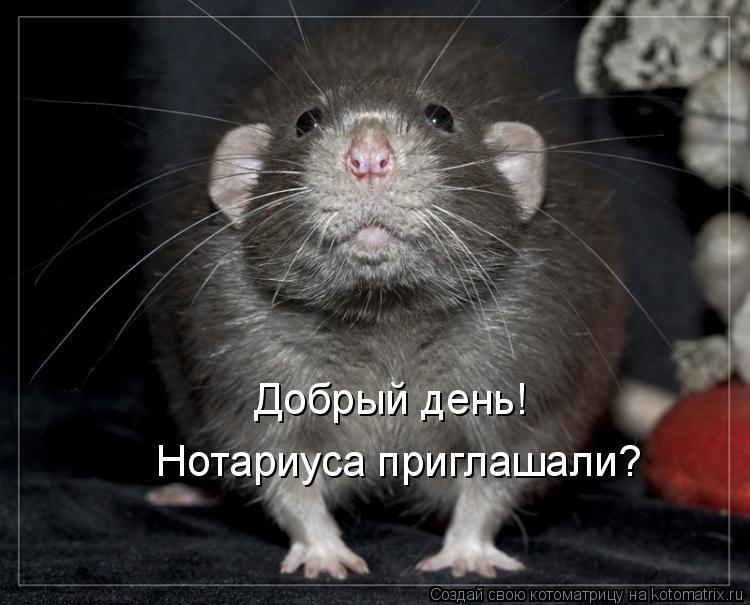 Картинки с мышами прикольные с надписями