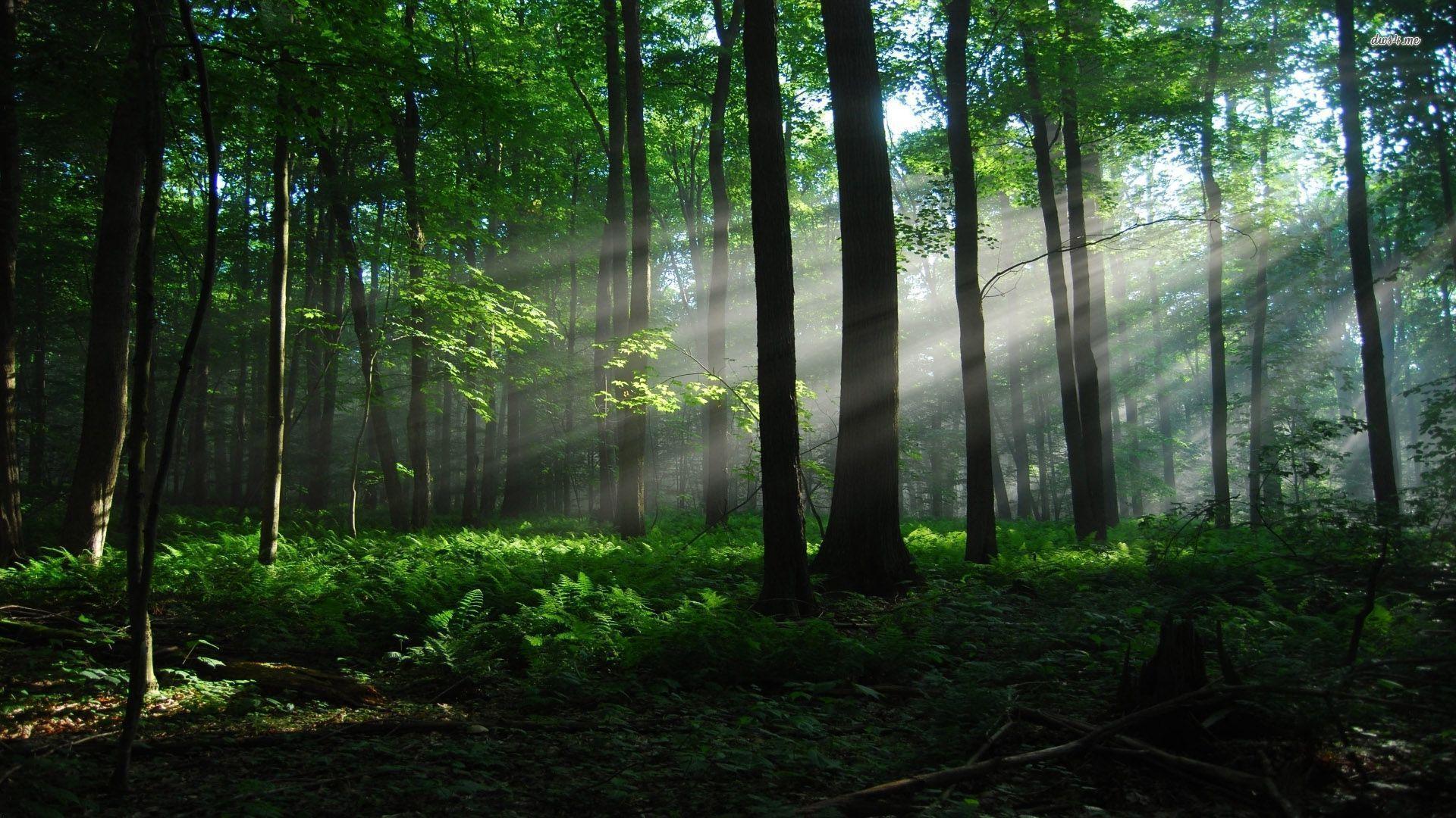 Тихий лес скачать