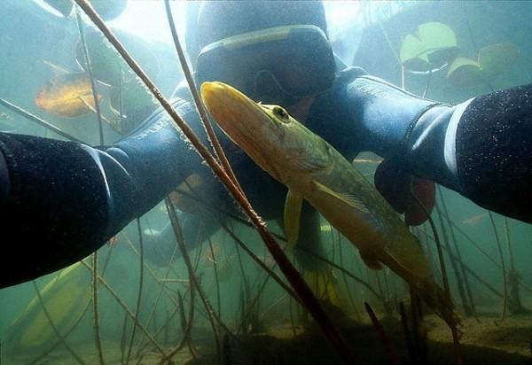 подводная охота на сазана ночью летом термобелье