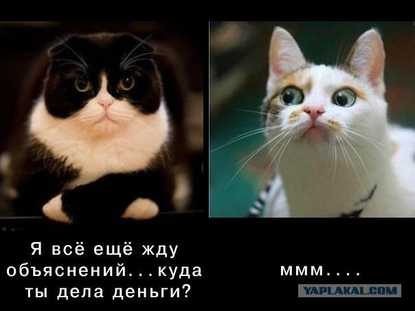 Картинки, картинка с кошкой и надписью когда муж спросит где деньги