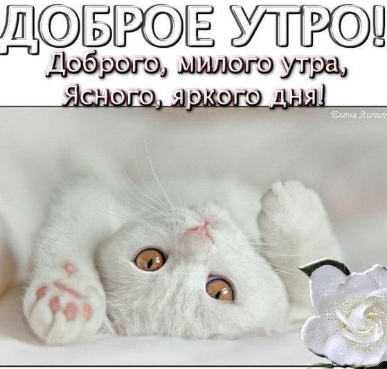 Любимому открытки с добрым утром и котами